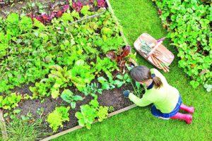 Vegetable Garden, Prepare, Hindi Article