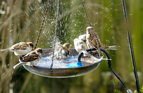 Save Birds, Missing Birds Voices