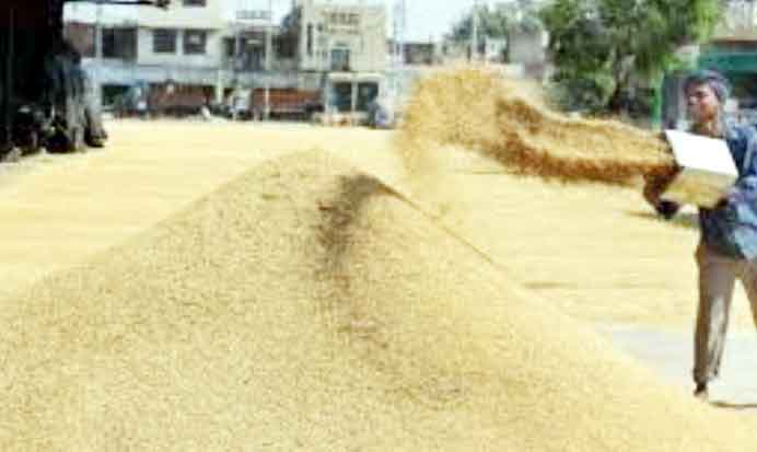 Paddy procurement starts