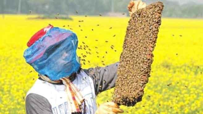 Beekeeping sachkahoon