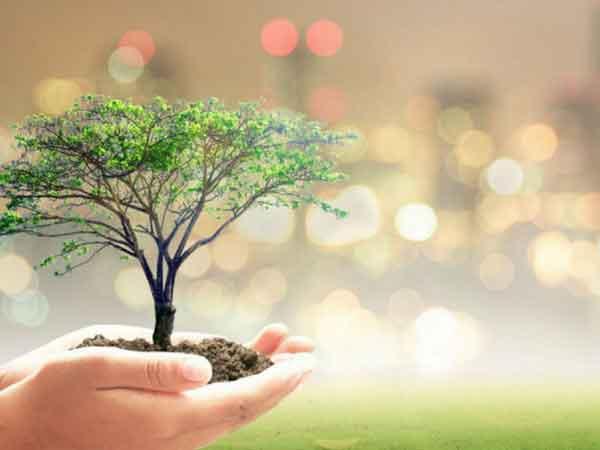 Tree Plantation Dera Sacha Sauda