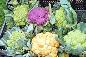 Protect-Cauliflower-Crop