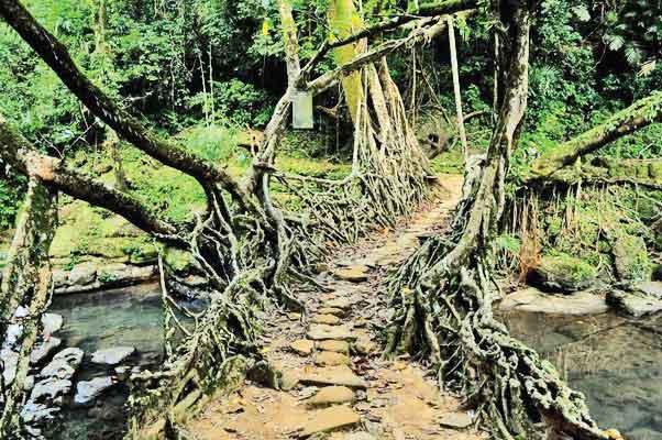 tree branch bridge