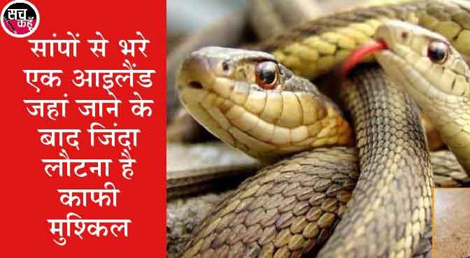 snakes are not found in Ireland sachkahoon