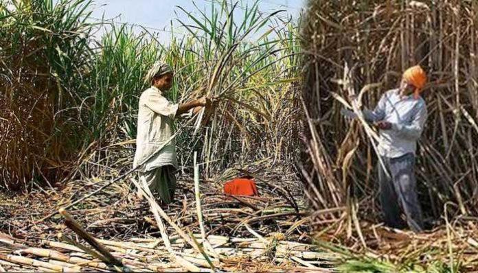 -up-sugarcane-price-