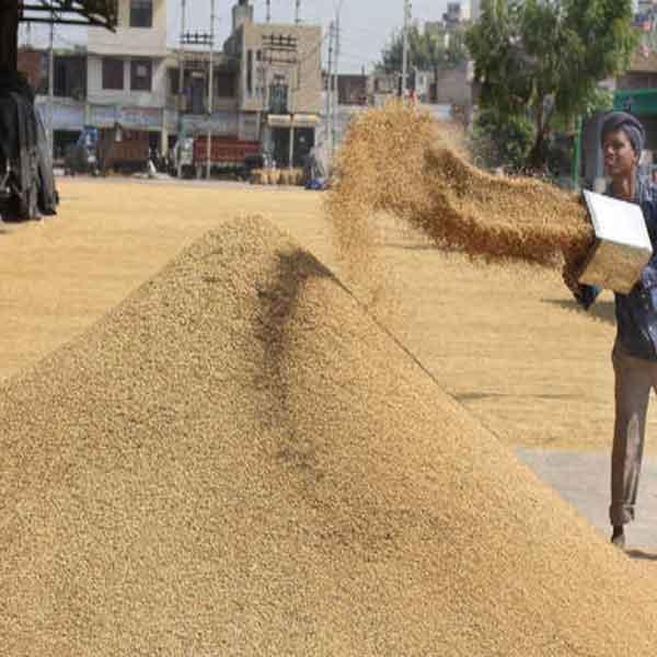 paddy will be done in Haryana-Punjab SACHKAHOON